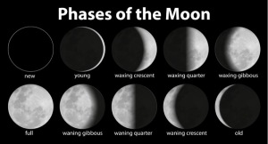 phases of the moon (shutterstock)